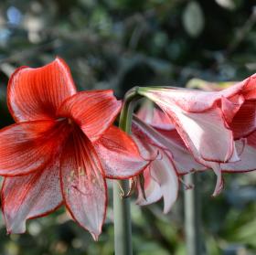 Lednická květina