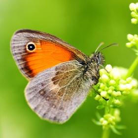 Motýl a byliny