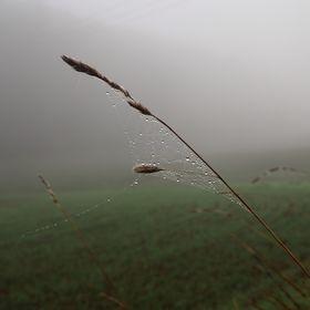 Pavoučí dílko a mlha 2