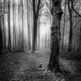 """""""Strašidelný les!"""""""