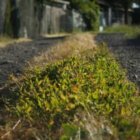 Ozářená tráva