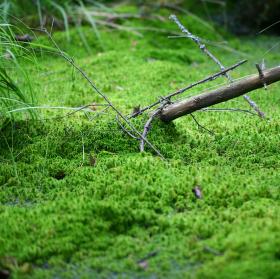 Příběh z mechu a... trávy?