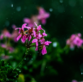Ubíjená kapkami deště