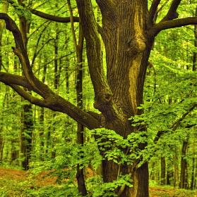 Posvátný strom