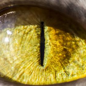 Sauronovo oko? Kdepak!