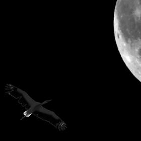Let k Měsíci