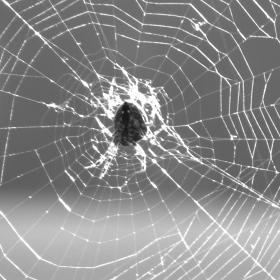 číhající pavouček :)