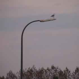 Stojící pták