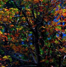 Podzimní malování...