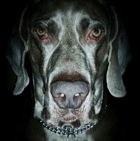 Dark dog!