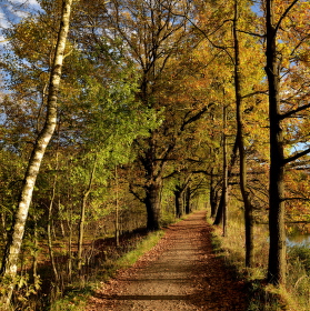 Podzimní alejí