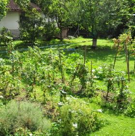Slackline na mé zahradě