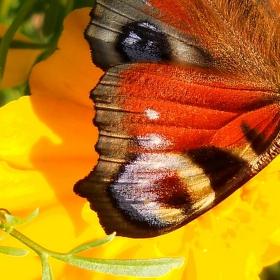 Motýlí ...