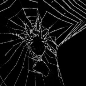 Pavouk a jeho kořist II.