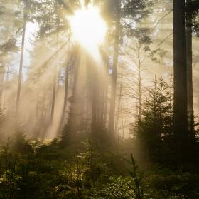 Výhra slunce nad mlhou