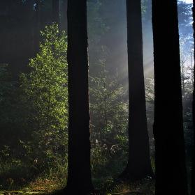 Ráno  v  lese...