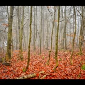 Podzimní bukový les