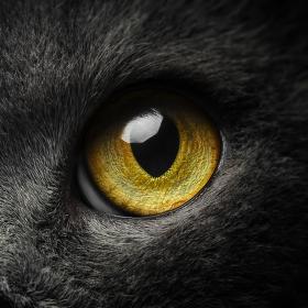 Magie očí