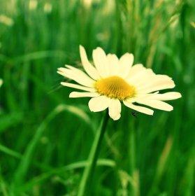 Letní květ