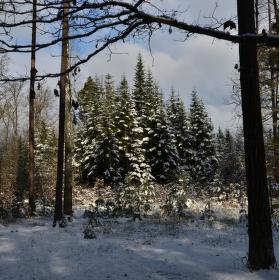 V zasněženém lese