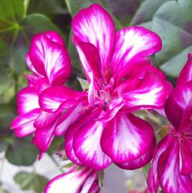 Farebná záhrada 4