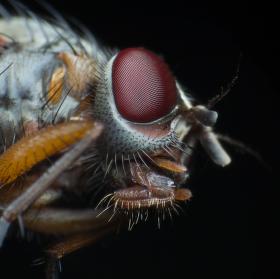A zase hmyzák