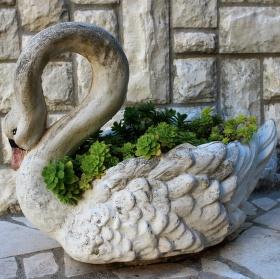 Chorvatská labuť