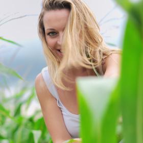 LV v kukuřici