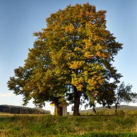 barvení podzimem