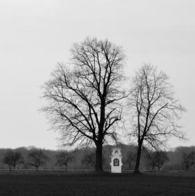 Mezi dvěma stromy