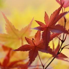 Podzimní časy III.
