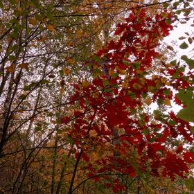 Podzim začíná
