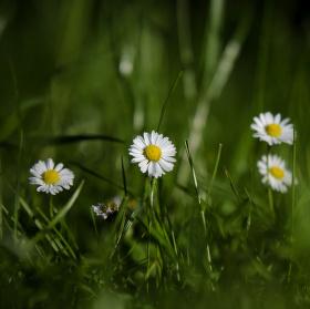 V trávě....