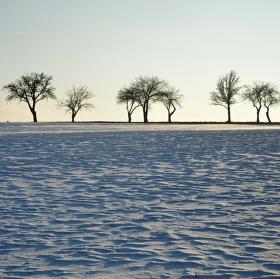 Zimní stromořadí