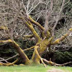 Stromovous pod Ještědem
