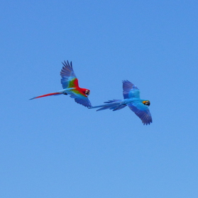 Colourful Flight