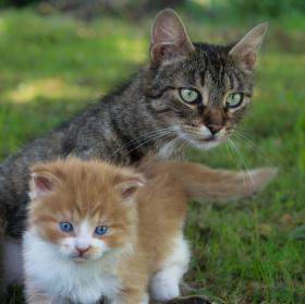 Matka a její mláďata