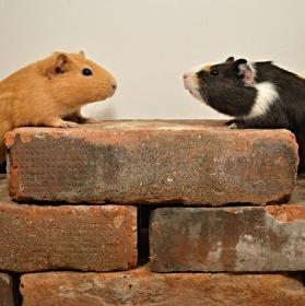 Romeo a Julie se našli