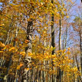 V korunách stromů