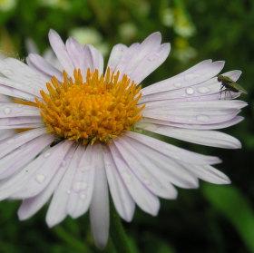 Moucha na květu