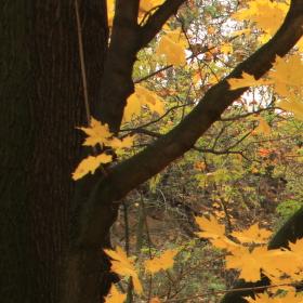 Podzim na Štemplovci