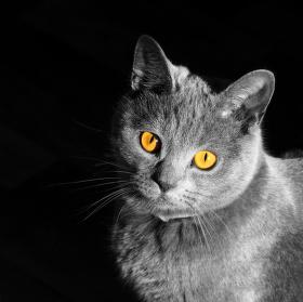 Černobílá Sisi.