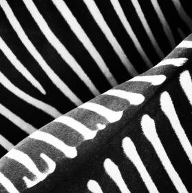 Black&White or White&Black