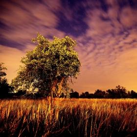 Noční krajina, aneb když nemůžeš spát
