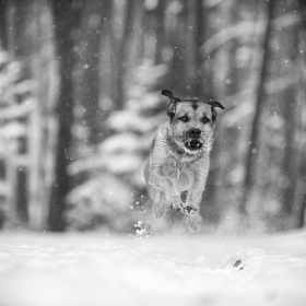 ...winter klasik...