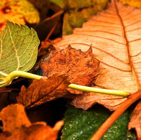 Podzimní.....
