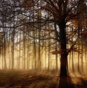 Podzimní 2