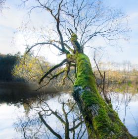 """Strom nad jezerem """"Odlezly"""""""