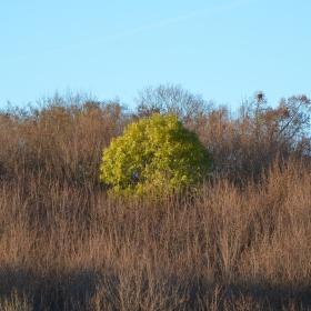 Podzimní solitér