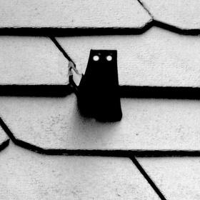 Šest černých koček…